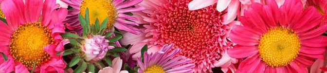Привітання з 8 Березня коханій дівчині і дружині