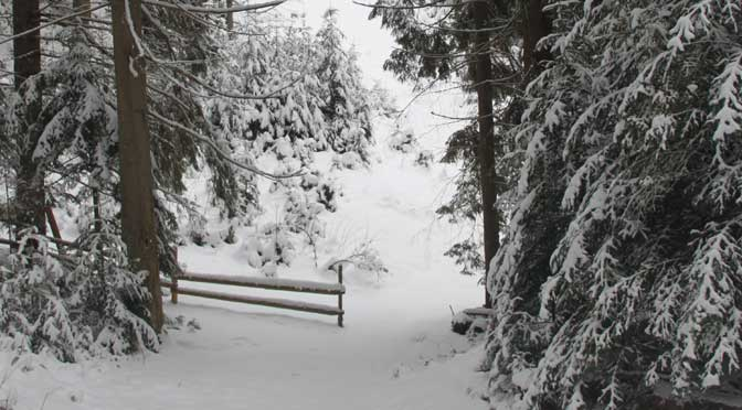 Зимовий ліс в Карпатах